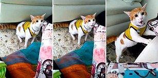 Kolombiya'nın Attığı Gol Sonrası Sevincini Gol Diye Bağırarak Gösteren Kedi