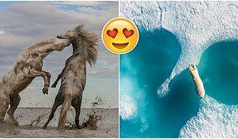 Büyüleneceksiniz! 2018 Doğayı Koruma Fotoğraf Yarışmasında Kazananlar Açıklandı!