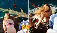 Köpek Balığını Eliyle Beslemeye Çalışırken Elini Kaptırıp Suyun İçine Sürüklenen Kadın