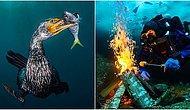 Bu Fotoğrafların Güzelliği Nefesinizi Kesecek! 2018'in En İyi Su Altı Fotoğrafçılığı Kazananları Açıklandı!