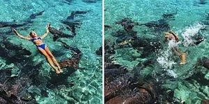 Sosyal Medya Hesabı İçin Poz Verirken Köpek Balığı Tarafından Isırılan Instagram Fenomeni