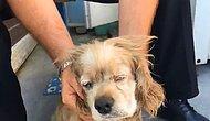 Yaşlandı Diye Sokağa Atıldığını İddia Ettiği Köpek İçin Kahrolan Adam
