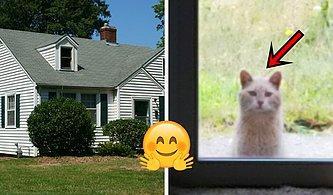 Taşındığı Evin Arka Bahçesinde Bir Kedi ve Eski Kiracılardan Kalan Minnoş Bir Not Bulan Kadın