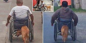 Tekerlekli Sandalyeye Mahkum Olan İnsan Dostuna Yardımcı Olan Köpek