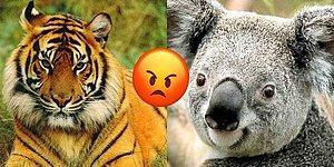 Sinirlendiğinde Hangi Hayvana Benziyorsun?