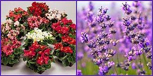 Yazın Açan Hangi Çiçek Senin Ruhunu Yansıtıyor?