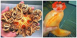 Şaşırmaya Hazır Olun! Rus Denizcinin Bulduğu Hepsi Birbirinden Acayip Deniz Canlıları