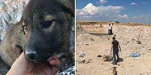 Dağ Başına Bırakılan Onlarca Yavru Hayvanı Instagram'dan Yaptıkları Çağrıyla Sıcak Yuvalara Kavuşturan Güzel İnsanlar