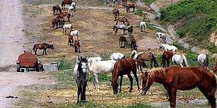 Büyükada'ya Sokulmayan 220 At, 2 Aydır Güneşin Altında Bekliyor: 'Günden Güne Ölüyorlar'