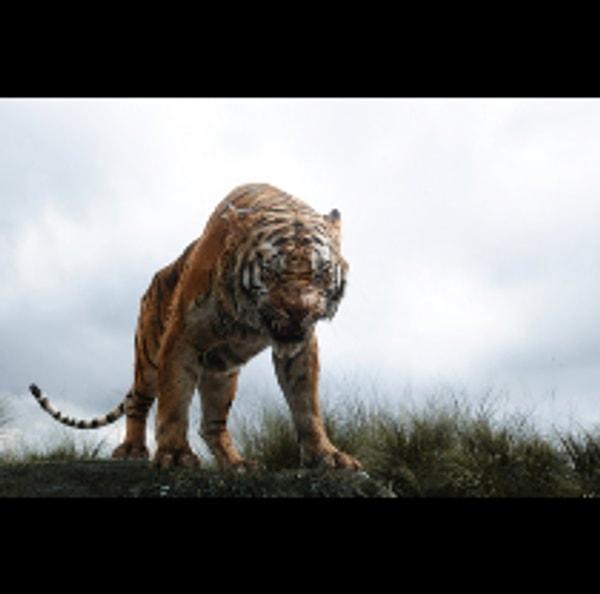 Samoa Tiger