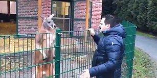 Kangurunun Sahte Mehdi Tuncer Çiftçi'yle İmtihanı