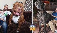 Bu Nasıl Bir Aşk! Hayvan Sevgisini Devasa Boyutlara Taşımış Sıra Dışı 10 Evcil Hayvan ve Sahipleri