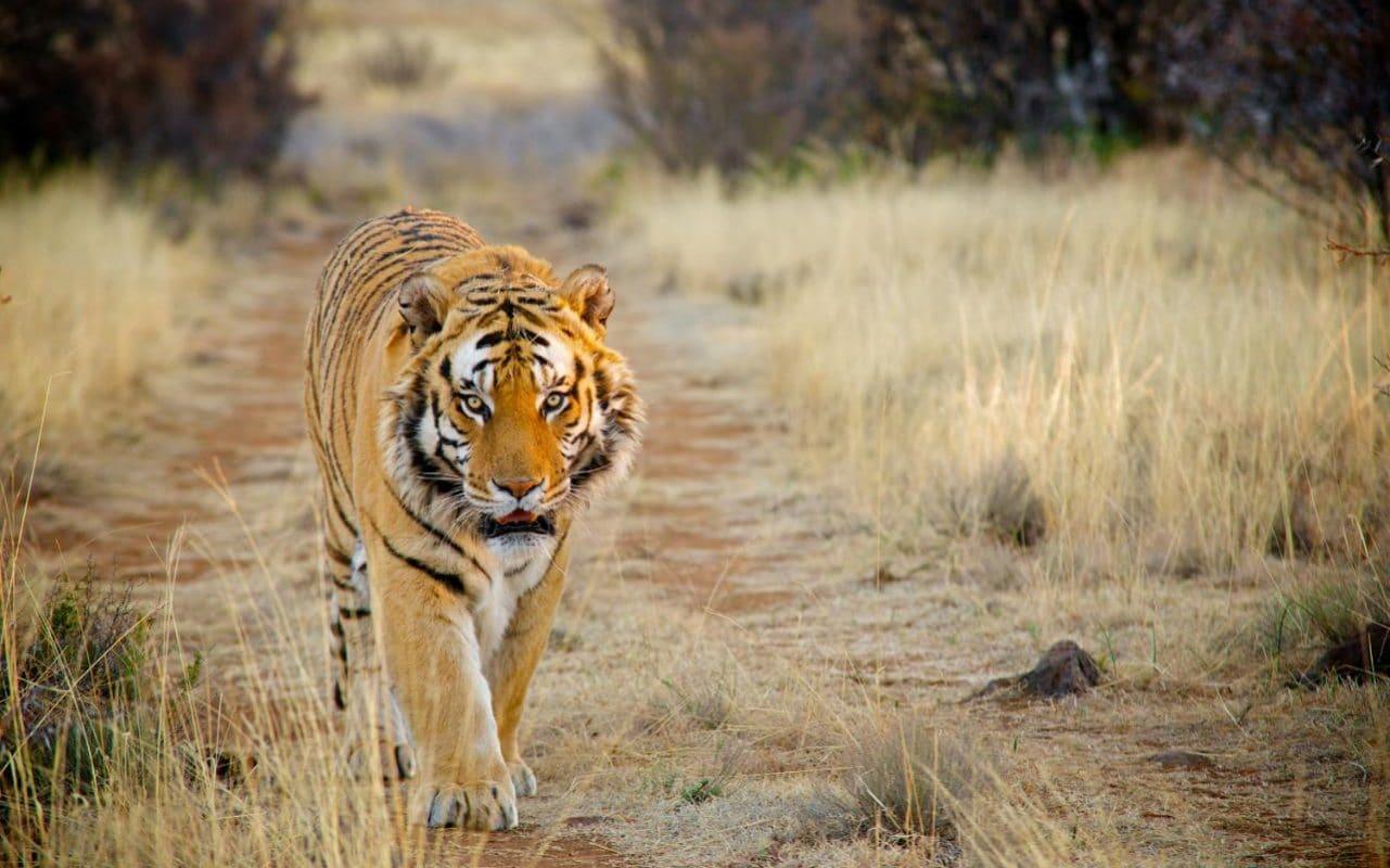 Dünyadaki kaç hayvan türü, bizimle komşudur