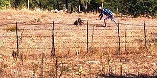 Daha Ne Kadar Canileşebiliriz? Bodrum'da Bir Adam Avlanan Şahini Kürekle Öldürdü