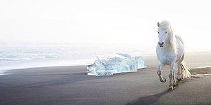 Bu Görüntüler Tamamen Gerçek! Amerikalı Fotoğrafçının Masalsı Diyar İzlanda'da Yakaladığı Muhteşem Kareler 😍