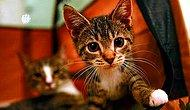 Adana'da Dört Ayağı Kesilmiş Yavru Kedi Bulundu: 'Fail Bulunsa Bile 1.250 Lira Cezayla Kurtulacak'