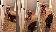 Yürüme Engelli Ufaklıktan Köpek Dostuna: 'Bak Maggie, Yürüyorum Maggie!'
