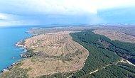 Sinop'ta Nükleer Santral İçin Binlerce Ağaç Kesildi: 'Patlama Olursa Daha Az Kişi Ölsün Diye Burası Seçildi'