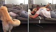 Kanepede Uyuyan Çiftin Arasına Yatan Sevimli Köpek