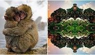Etrafımızdaki Harika Detayları Gözler Önüne Seren ve Dışarıdan Bir Dokunuş İçermeyen 25 Muhteşem Fotoğraf