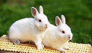 Hayat Zaferlerle Dolu! Rüyada Tavşan Görmek Ne Anlama Gelir?