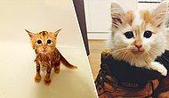 Bugün Uluslararası Kediler Günü 😍 Birbirinden Tatlış Halleriyle Hayatımıza Renk Katan Minnoş Kediler