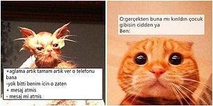 İfadeleriyle Bizleri Andıran Minnoş Kedilere Yazılmış Diyaloglarla Hepimizi Eğlendirecek 17 Paylaşım