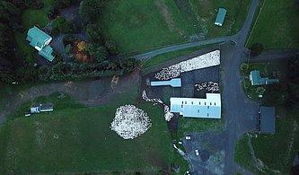 İzlemesi Aşırı Keyifli Şeylerde Bugün: 3500 Koyunun Drone ile Kaydedilen Görüntüleri