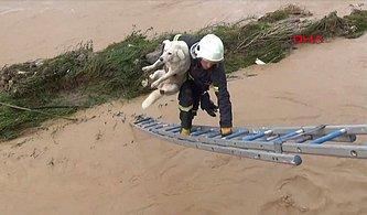 Ordu'daki Sel Felaketinden El Birliği İle Kurtarılan Köpek