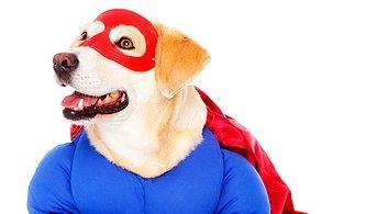 Cesurca Davranışlarıyla İnsanların Hayatlarını Kurtaran Köpekleri Duyunca Onlara Daha Çok Hayran Olacaksınız! 😍