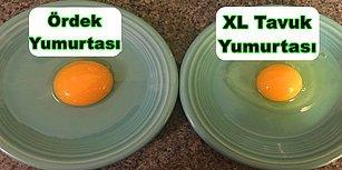 Kocaman Sarısı ve Mükemmel Lezzetiyle Ördek Yumurtasının Vücudumuza Sağladığı 13 Fayda