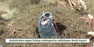 Eşsiz Savunma Mekanizması ile Saldırganlarını Gafil Avlayıp Ölüme Sürükleyen Hayvanlar