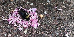 Hayatını Kaybeden Arının Etrafını Çiçek Yapraklarıyla Donatan Karıncalar