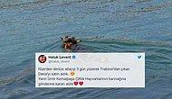 Haluk Levent Yine Devrede! Yüzerek Rize'den Trabzon'a Firar Eden Boğa Kesilmeyecek