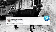 O Film Gibi Bir Kurtuluş Hikâyesinin Kahramanı: Boğa Ferdinand İzmir'deki Yeni Yuvasında