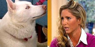 Köpeğini Vejetaryen Olmaya Zorlayan Kadına En Güzel Cevabı Sebze Yerine Et Yemeği Tercih Eden Köpeği Verdi!