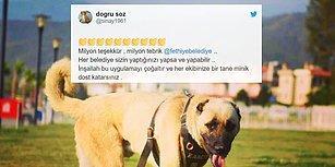 Arabanın Arkasında Sürüklenmişti: Tedavisi Tamamlanan Talihsiz Köpek Fethiye Belediyesi'nde Zabıta Oldu