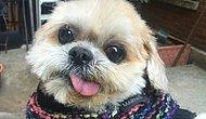 İnstagramın En Ünlü 15 Köpeği