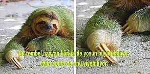 Sizi Hayvanlar Aleminde Bir Gezintiye Çıkarırken Ufkunuzu da Fazlasıyla Açacak 101 Bilgi