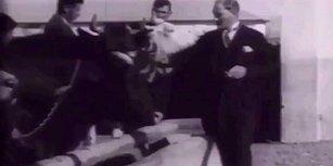 Bazen O Dönemde Yaşayan Bir İnek Olmak İstersin: Şakır Şakır Fransızca Konuştuktan Sonra Hayvancılık Hakkında Bilgi Alan Atatürk