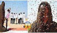 Guinness Rekorlar Kitabı'na Girebilmek İçin Vücudunun Tamamını Arılarla Kaplayan Adam