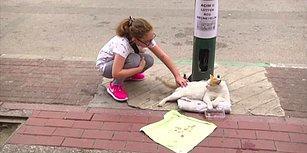 Mama Parasını Dilenerek Çıkaran Kedi: 'Açım, Lütfen Boş Geçmeyelim'