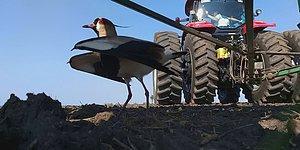 Yumurtalarını Koruyan Kuşa Zarar Gelmemesi İçin Çabalayan Çiftçiden İçinizi Isıtacak Hareket!
