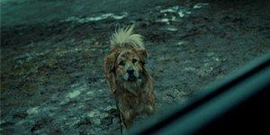 İnsanlık Ölmesin! Sokaktaki Hayvan Dostlarımız İçin Yapabileceğiniz Basit Ama Hayat Kurtarıcı Eylemler