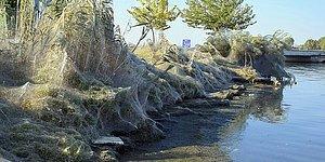 Yunanistan'da Bir Kasabanın Sahil Şeridini Saran Dev Örümcek Ağı!