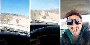 Deve Kuşlarını 'Acımasızca' Ezerken Keyif Alan Vicdansız Şoför