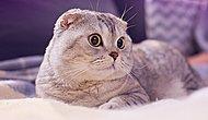 Kedinizin Evde Yalnız Kaldığında Mutlaka Yaptığı 11 Gizli Şey