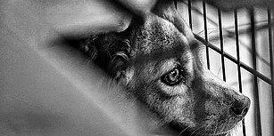 Bolu'da Vahşet: Üç Yavru Köpeği Ağaca Asıp Tüfekle Ateş Ettiler!