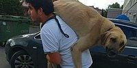 İyi İnsanlar Hala Var! Sokak Köpeğini Tedavisi İçin Sırtında Taşıyarak Veterinere Götüren Adam Gibi Adam!