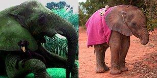 Fillerin, İnsanları Yavru Köpekler Kadar Sevimli Bulduklarını Biliyor muydunuz?
